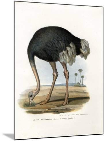 Ostrich, 1864--Mounted Giclee Print
