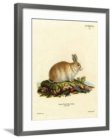 Angora Rabbit--Framed Art Print