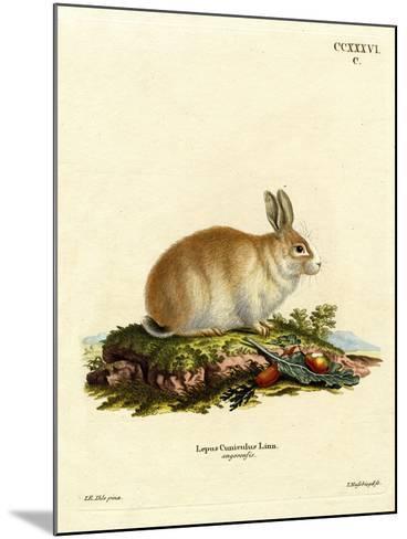 Angora Rabbit--Mounted Giclee Print