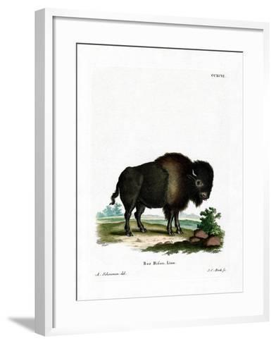 American Bison--Framed Art Print