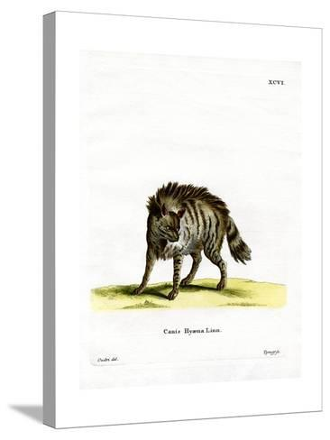 Striped Hyena--Stretched Canvas Print