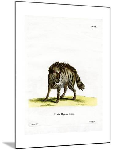 Striped Hyena--Mounted Giclee Print