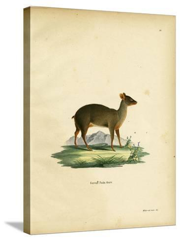 Southern Pudu--Stretched Canvas Print