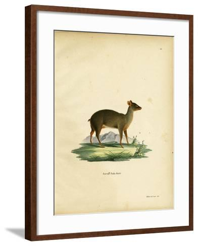 Southern Pudu--Framed Art Print