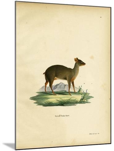 Southern Pudu--Mounted Giclee Print