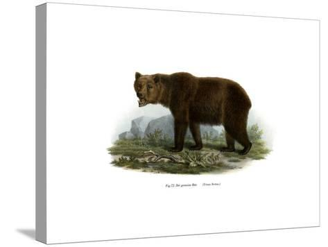 Common Bear, 1860--Stretched Canvas Print