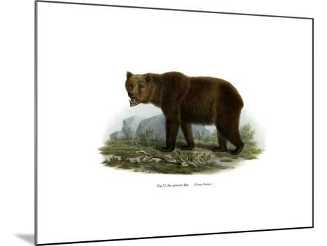 Common Bear, 1860--Mounted Giclee Print