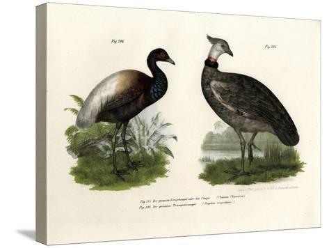 Chaja Bird, 1864--Stretched Canvas Print