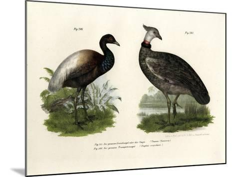 Chaja Bird, 1864--Mounted Giclee Print