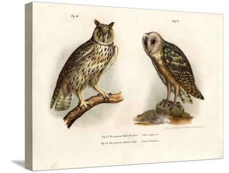 Horned Owl, 1864--Stretched Canvas Print