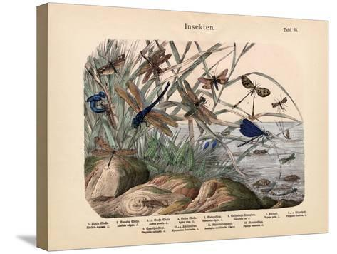 Insects, C.1860--Stretched Canvas Print