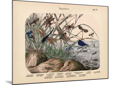 Insects, C.1860--Mounted Giclee Print