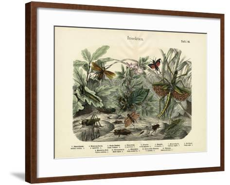 Insects, C.1860--Framed Art Print