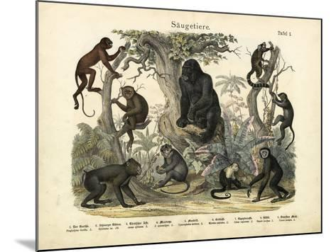 Mammals, C.1860--Mounted Giclee Print