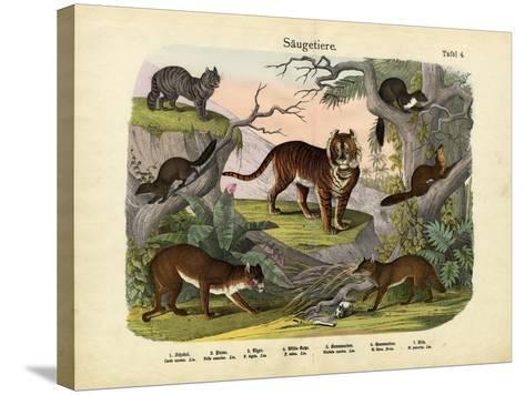 Mammals, C.1860--Stretched Canvas Print