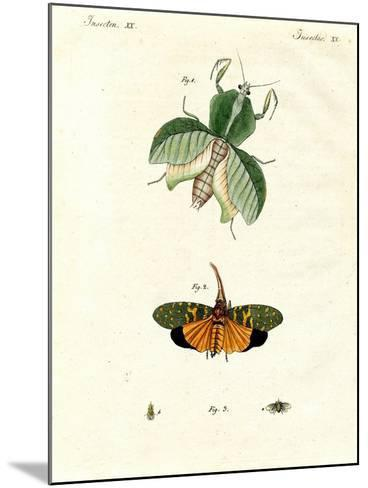 Strange Insects--Mounted Giclee Print