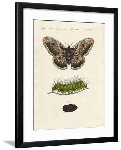 Strange Insects--Framed Art Print