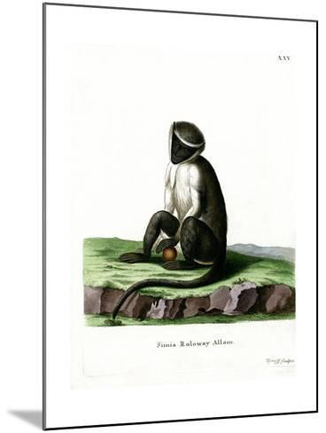 Roloway Guenon--Mounted Giclee Print
