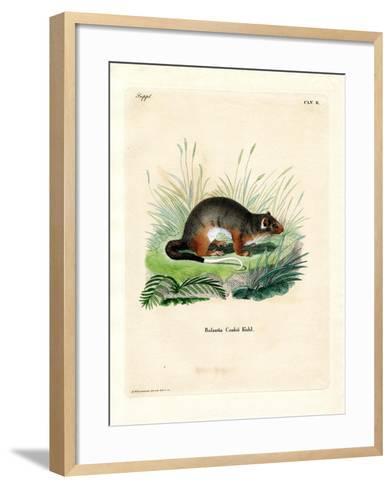 Cook-Phalanger--Framed Art Print