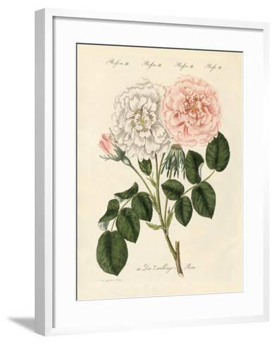 Kinds of Roses--Framed Art Print