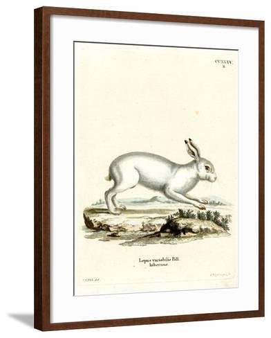 Mountain Hare--Framed Art Print