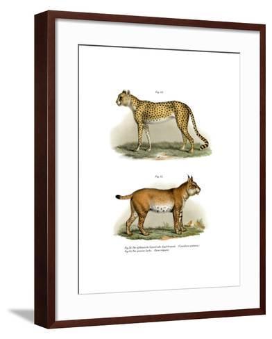 Gepard, 1860--Framed Art Print