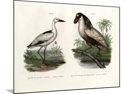 Crab Plover, 1864--Mounted Giclee Print