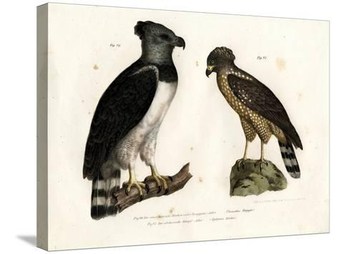 Harpy Eagle, 1864--Stretched Canvas Print