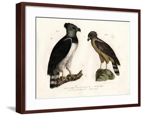 Harpy Eagle, 1864--Framed Art Print