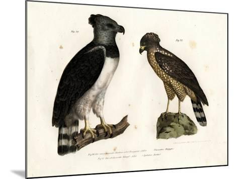 Harpy Eagle, 1864--Mounted Giclee Print