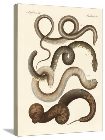 Strange Snake--Stretched Canvas Print