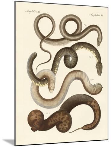 Strange Snake--Mounted Giclee Print