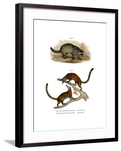 Racoon, 1860--Framed Art Print