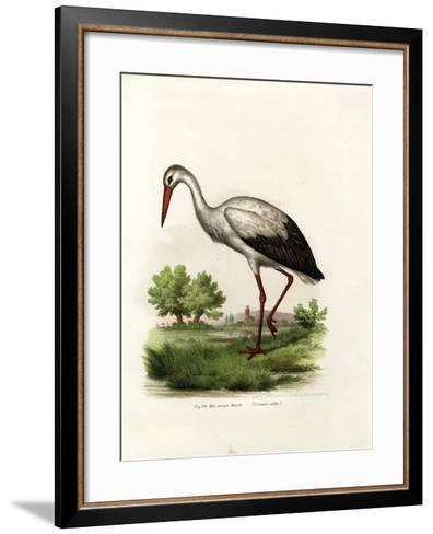 White Stork, 1864--Framed Art Print