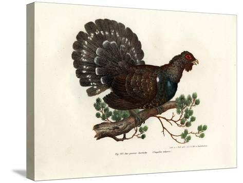 Wood Grouse, 1864--Stretched Canvas Print