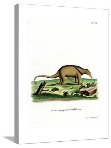 Southern Tamandua--Stretched Canvas Print