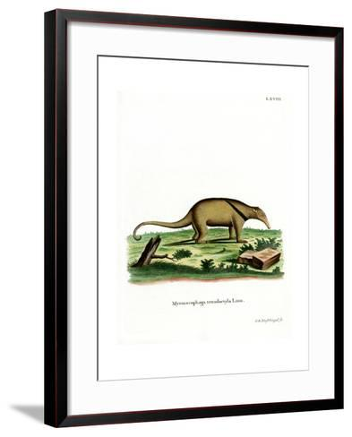 Southern Tamandua--Framed Art Print