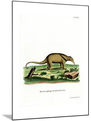 Southern Tamandua--Mounted Giclee Print