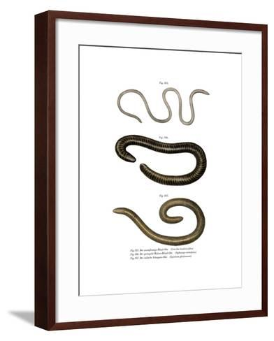 Wormlike Caecilia--Framed Art Print