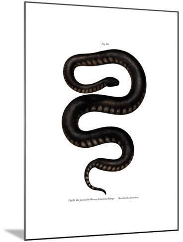 Javan File Snake--Mounted Giclee Print