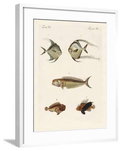 East Indian Fish--Framed Art Print
