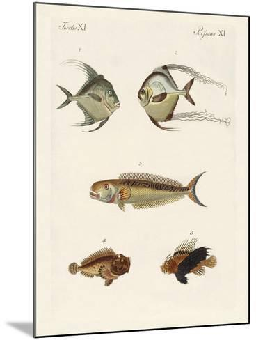 East Indian Fish--Mounted Giclee Print