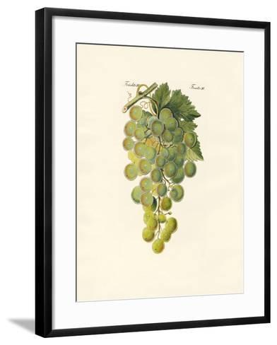 Kinds of Vines--Framed Art Print
