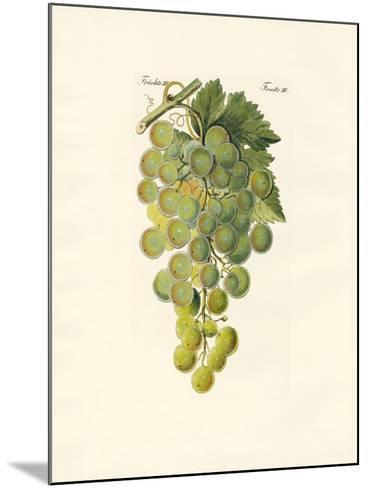 Kinds of Vines--Mounted Giclee Print