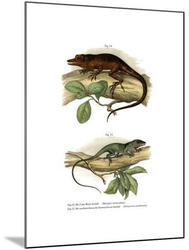 Vinales Anole--Mounted Giclee Print