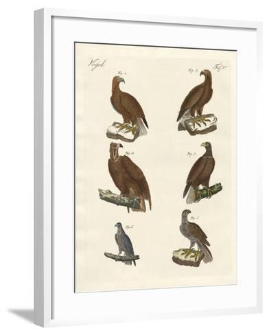 Birds of Prey--Framed Art Print