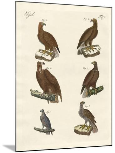 Birds of Prey--Mounted Giclee Print