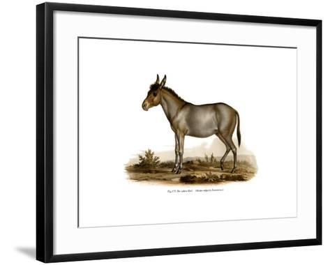 Donkey, 1860--Framed Art Print