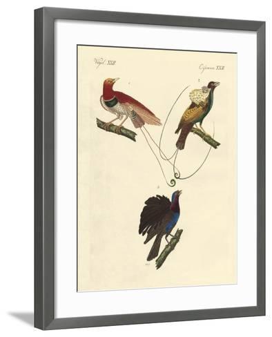 Birds of Paradise--Framed Art Print