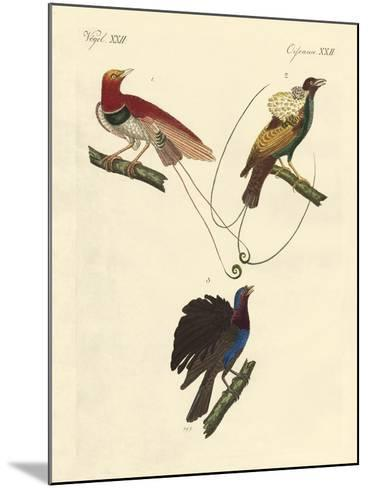 Birds of Paradise--Mounted Giclee Print